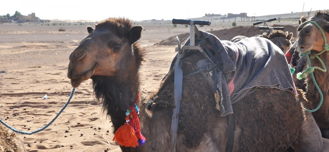 Tours through Morocco – deserts and Kasbahs